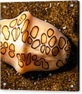Flamingo Tongue On A Plate Acrylic Print