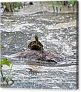 Top Of The World Turtle Acrylic Print