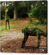Topiaries Acrylic Print