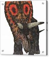 Torosaurus Dinosaur Acrylic Print