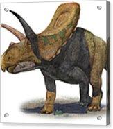 Torosaurus Latus, A Prehistoric Era Acrylic Print