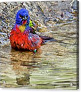Totally Disgusting Acrylic Print