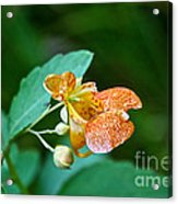 Touch Me Not Acrylic Print