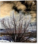 Touch Of Frost Acrylic Print