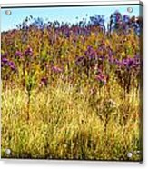 Touch Of Purple In October Acrylic Print
