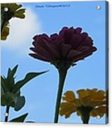 Touch Of Sky Acrylic Print