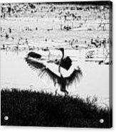 Touchdown-black And White Acrylic Print