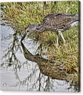 Touching Nose To Nose Acrylic Print