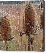 Touvelle Morning Acrylic Print