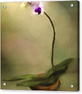 Toward The Light Acrylic Print by Jill Balsam