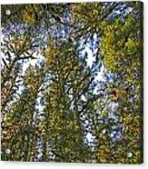 Towering Kodiak Acrylic Print