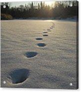 Tracks Into The Sunrise Acrylic Print
