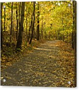 Trail Scene Autumn Abstract 1 Acrylic Print