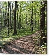 Trail Through Spring Forest Bavaria Acrylic Print