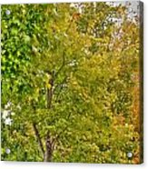 Transition Of Autumn Color Acrylic Print