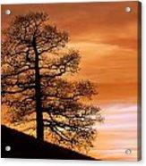Tree Against A Sunset Sky Acrylic Print