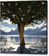 Tree And Benches Acrylic Print