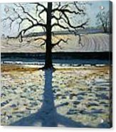 Tree And Shadow Calke Abbey Derbyshire Acrylic Print by Andrew Macara