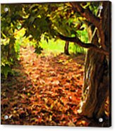 Tree And Shadows Acrylic Print