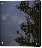 Tree And Sky Reflected Acrylic Print