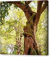 Tree At Killarny Forest Acrylic Print