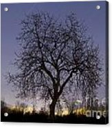 Tree At Night With Stars Trails Acrylic Print