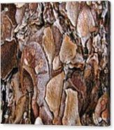 Tree Bark Close Up Acrylic Print