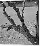 Tree Branch And Footprints On Sleeping Bear Dunes Acrylic Print