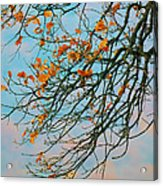 Tree Branches In Autumn Acrylic Print