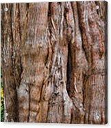 Tree Butts Acrylic Print