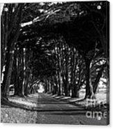 Tree Canopy Promenade Road Drive . 7d9977 . Black And White Acrylic Print