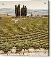 Tree Circle - Tuscany  Acrylic Print