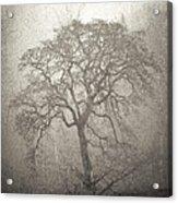 Tree Fog Acrylic Print