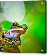 Tree Frog Acrylic Print by Albert Tan photo