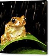 Tree Frog In Rain Acrylic Print by MarkBridger