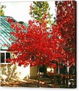 Tree II Acrylic Print