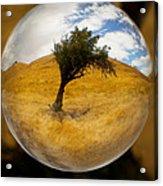 Tree In A Field Through A Glass Eye Acrylic Print