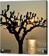 Tree In A Foggy Sunset Acrylic Print