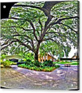 Tree In Church Yard Acrylic Print