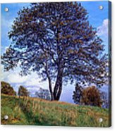 Tree In  English Park Acrylic Print