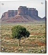 Tree In Monument Valley Acrylic Print