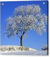 Tree In Winter, Co Down, Ireland Acrylic Print