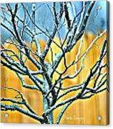 Tree In Winter Acrylic Print