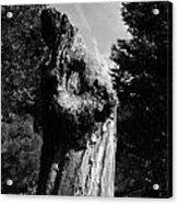 Tree Key Hole 1 Acrylic Print