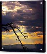 Tree Limb In Sunset Acrylic Print