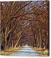 Tree Lined Lane Acrylic Print