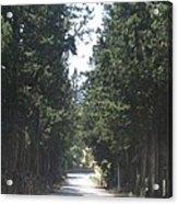 Tree Lined Street Acrylic Print