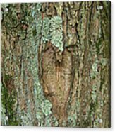 Tree Love Acrylic Print