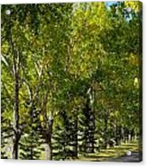 Tree Mix Acrylic Print