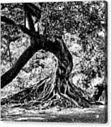 Tree Of Life - Bw Acrylic Print by Kenneth Mucke